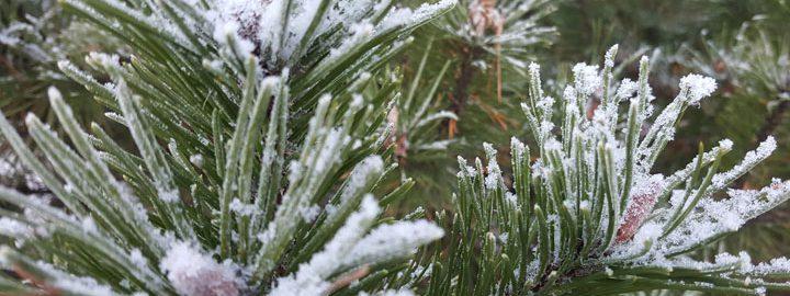 Talvi tulee